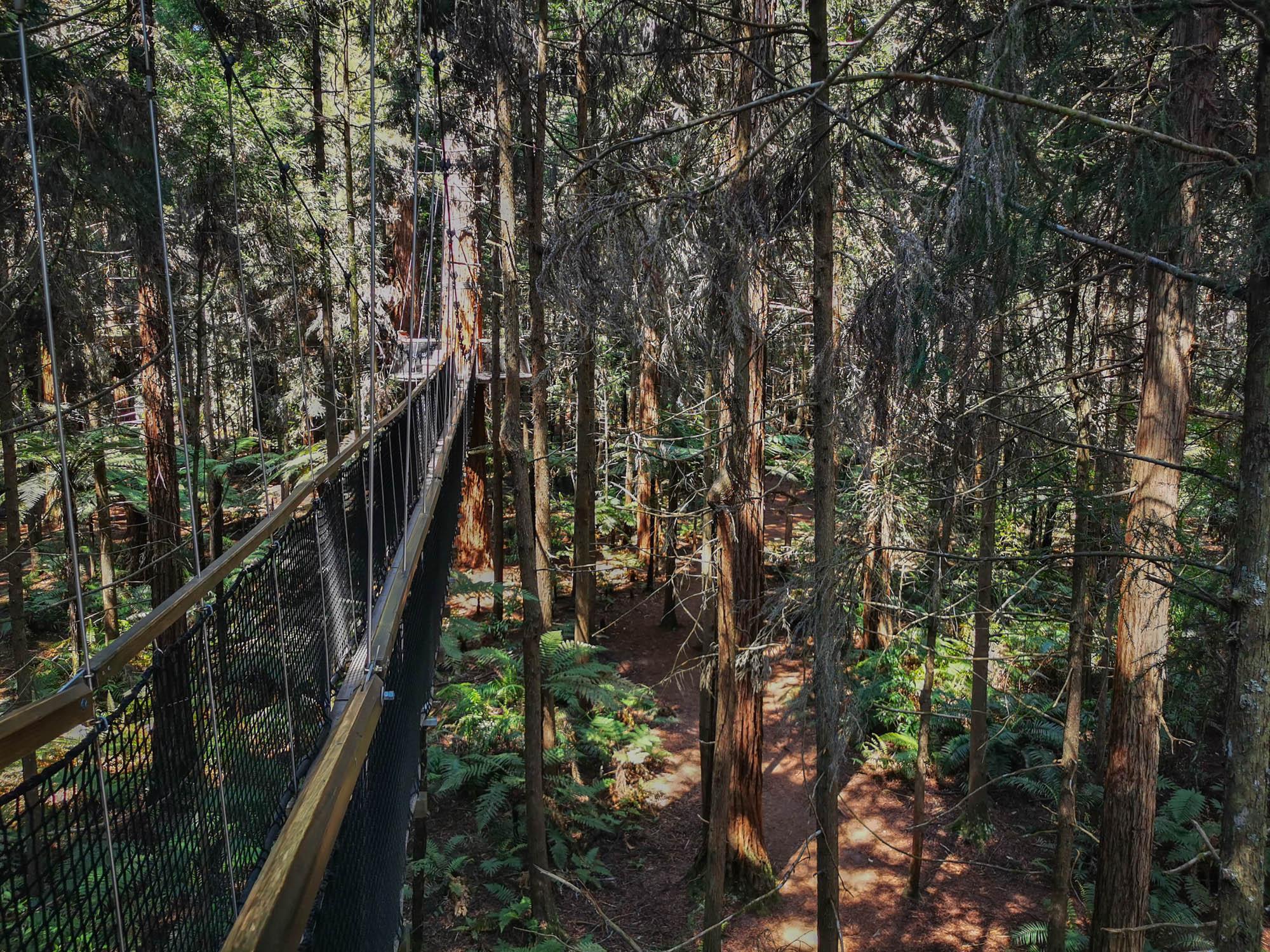 Rotoura and redwoods
